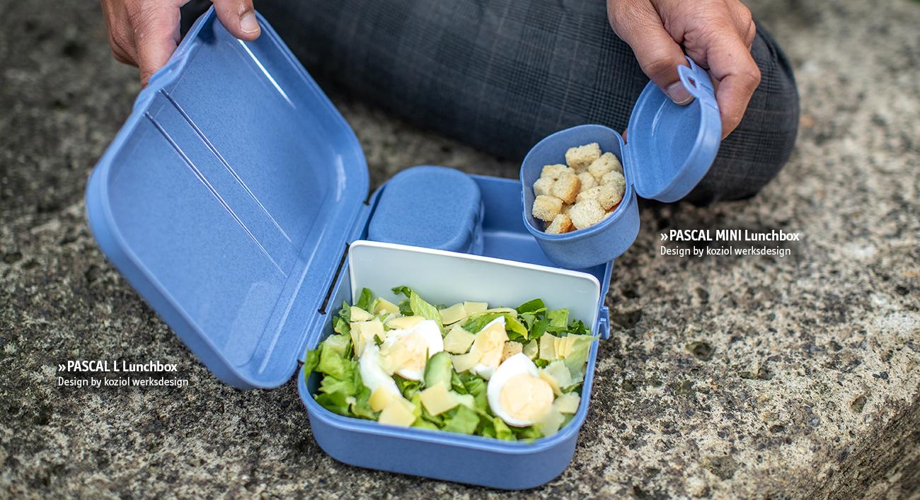 PASCAL_L_MINI Lunchbox